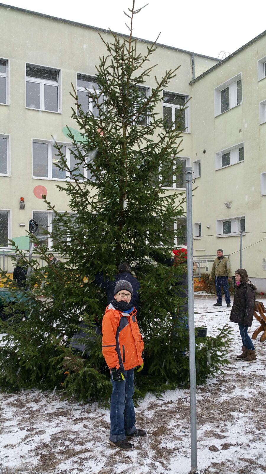 weihnachtsbaum aktion 2015 f rderkreis der mosaik grundschule oberhavel e v mosaikkreis. Black Bedroom Furniture Sets. Home Design Ideas